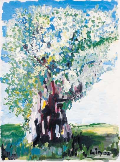 Olivenbaum im Frühling